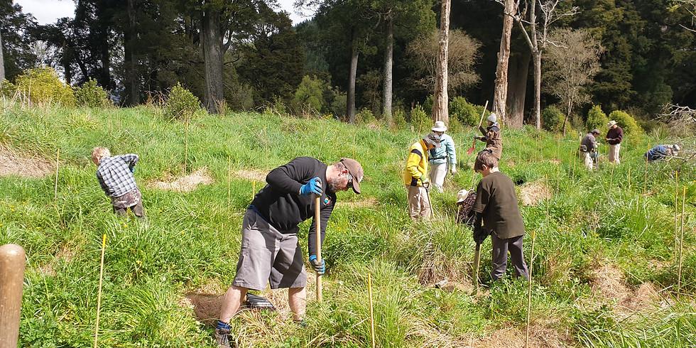 Rai Valley Community Planting Day