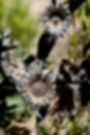 south africa - haasie vlei - the karoo - travel-report.nl