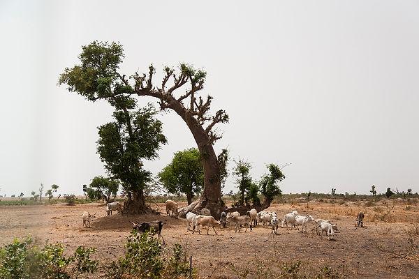 senegal - toubacouta - travel-report.nl