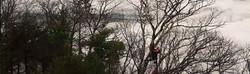 tree-trimming-slider