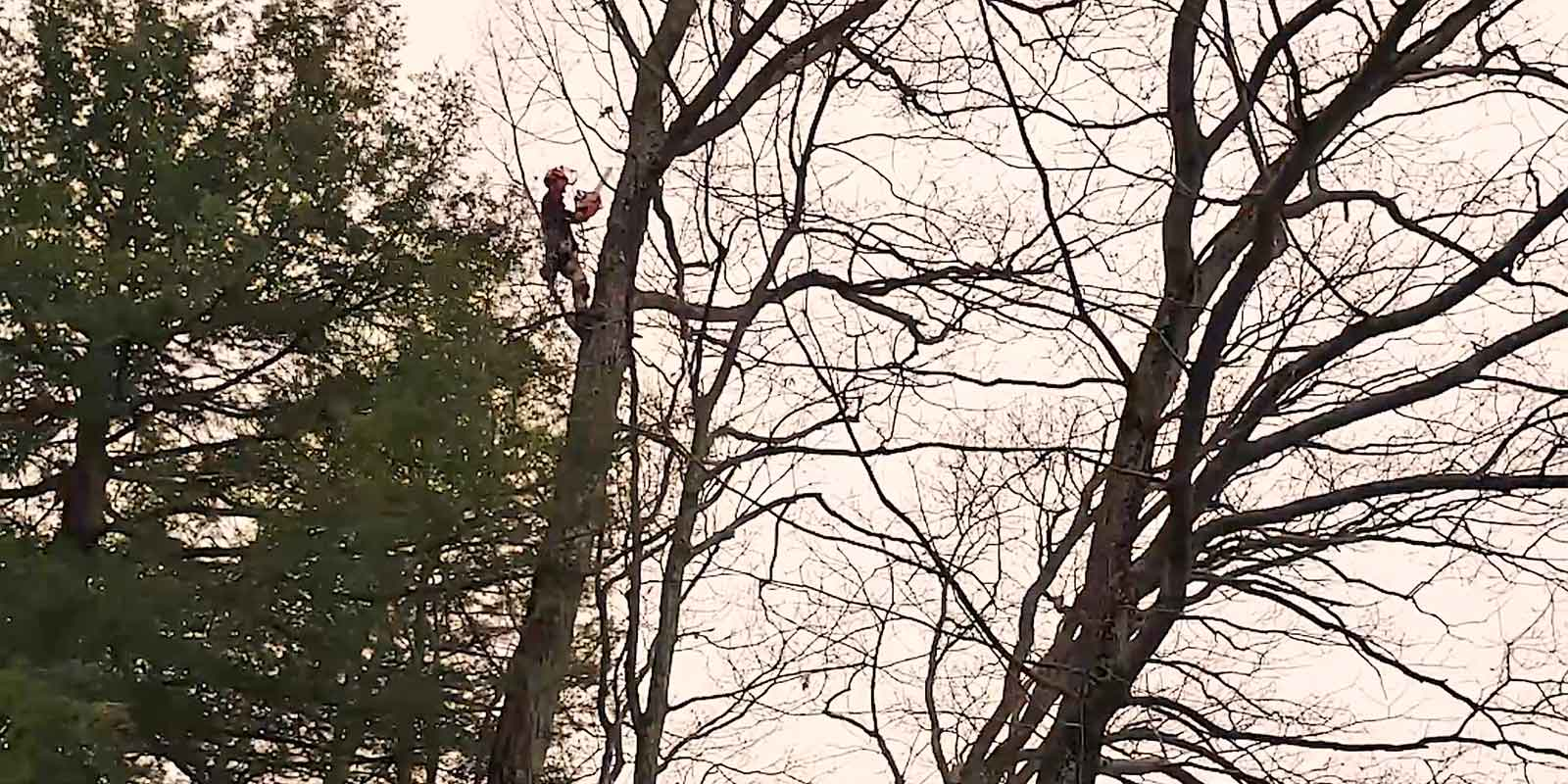 up-a-tree-with-a-chainsaw