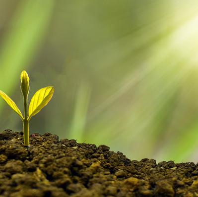BPE propose aux particuliers d'investir dans un Green bond