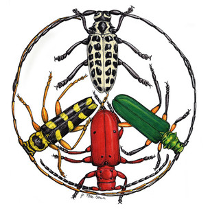 Longhorn Beetle Peace