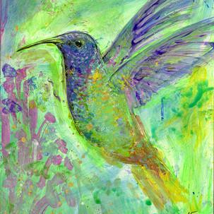 Blue Headed Hummingbird