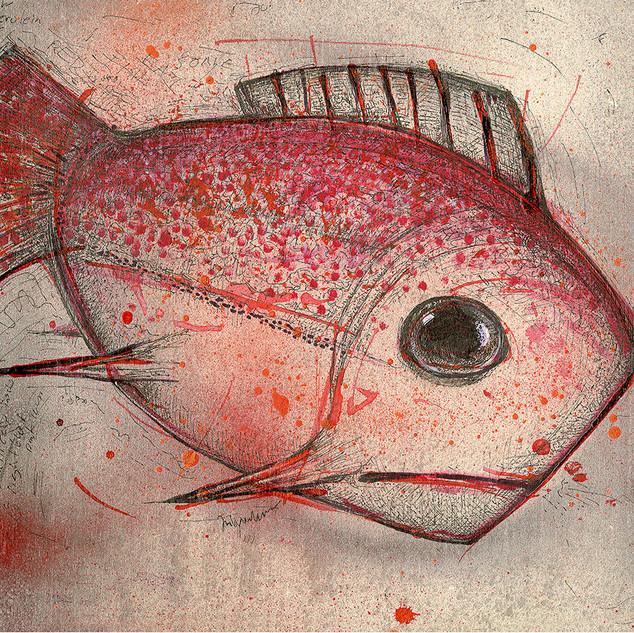 red fla-thead Fish