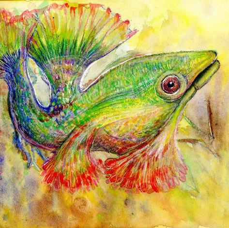 Colored fish