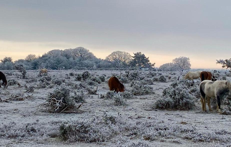 New Forest Winter Scene