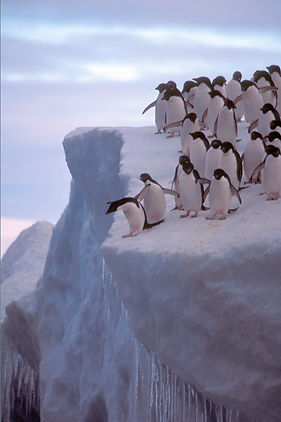 Penguins ice poster_edited-1.jpg