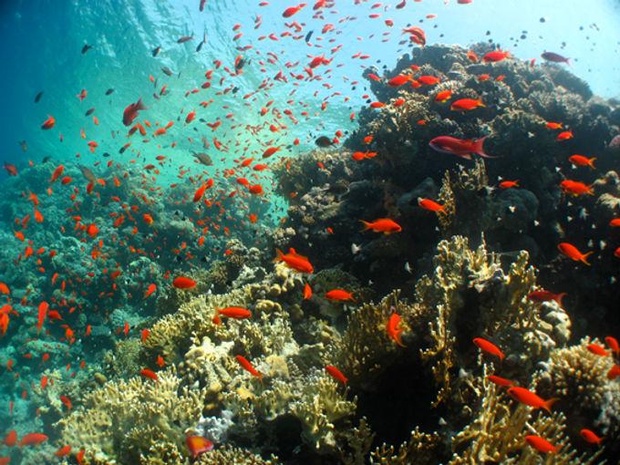 Red Sea Reef Scene FP.jpg