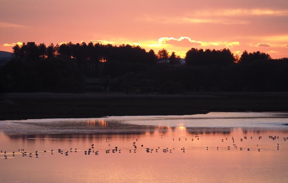 Arne Nature Reserve