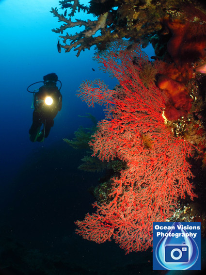 Diver exploring a reef in Bali, Indonesia