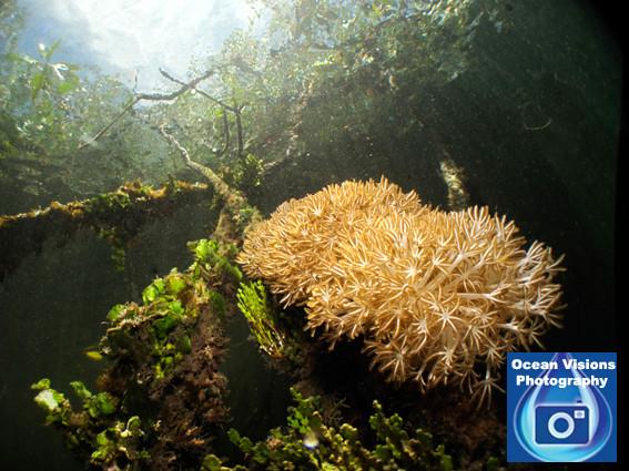 Papuan Paradise, Raja Ampat, Indonesia