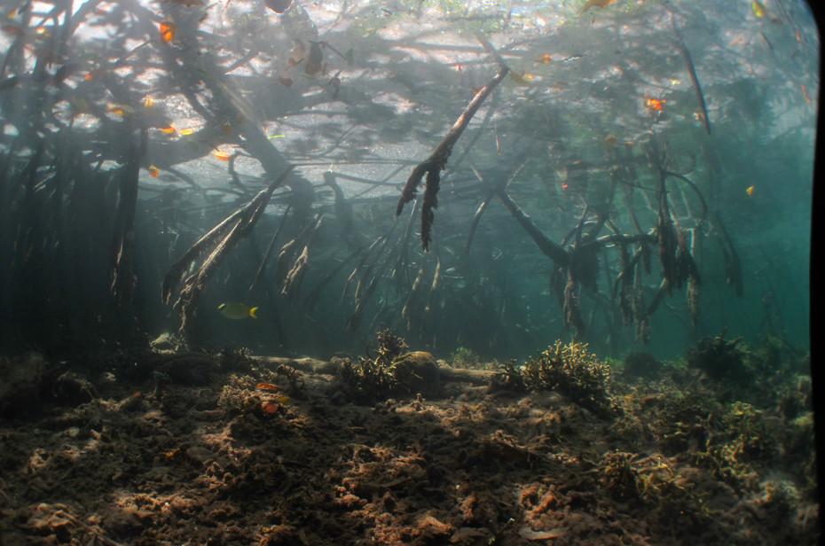 Beauty of the Mangroves, Raja Ampat, Indonesia