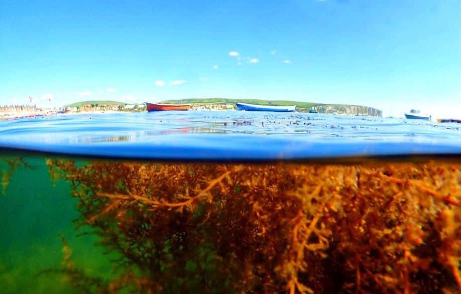 Swanage Underwater