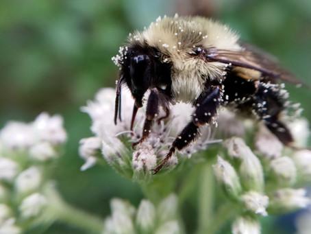 pollen palooza