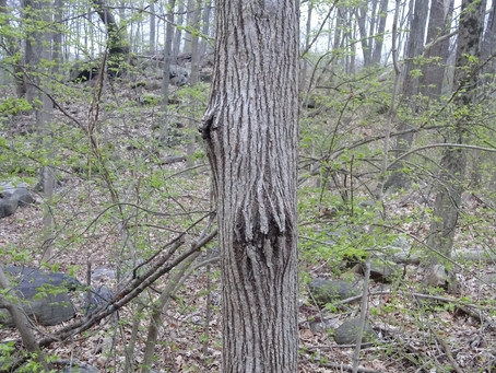 Earth Day & The Angry Tree