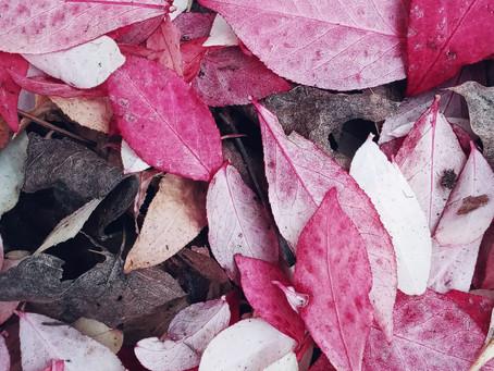 leaf mosaics