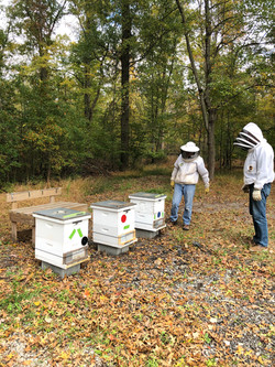 Mentoring new beekeepers