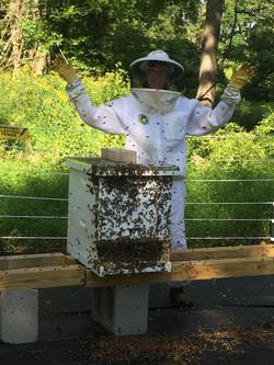 Abundance of bees