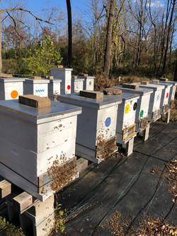 Our second bee yard