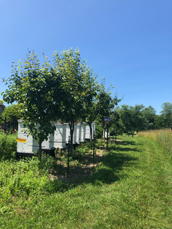One of our apiaries