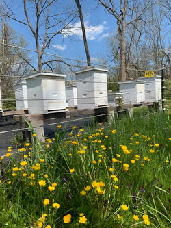 Spring time at the bee yard