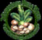 logo%20simples%20verde_edited.png