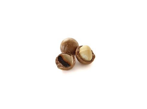 casca de macadamia