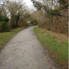 Clay Trail PL26 8RJ nice walk.JPG