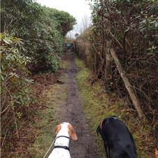 Caerloggas Path  from band house lane le