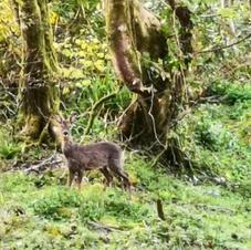 footpath 18 lower molinis deer.JPG