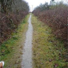 Caerloggas down nice path.JPG