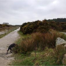 the clay trails Y path.JPG