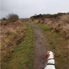 Caerloggas Path  treverbyn road side.JPG