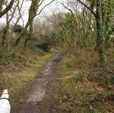 footpath 18 wild deer.JPG