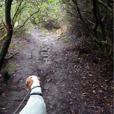 Caerloggas Path from Band House lane.JPG