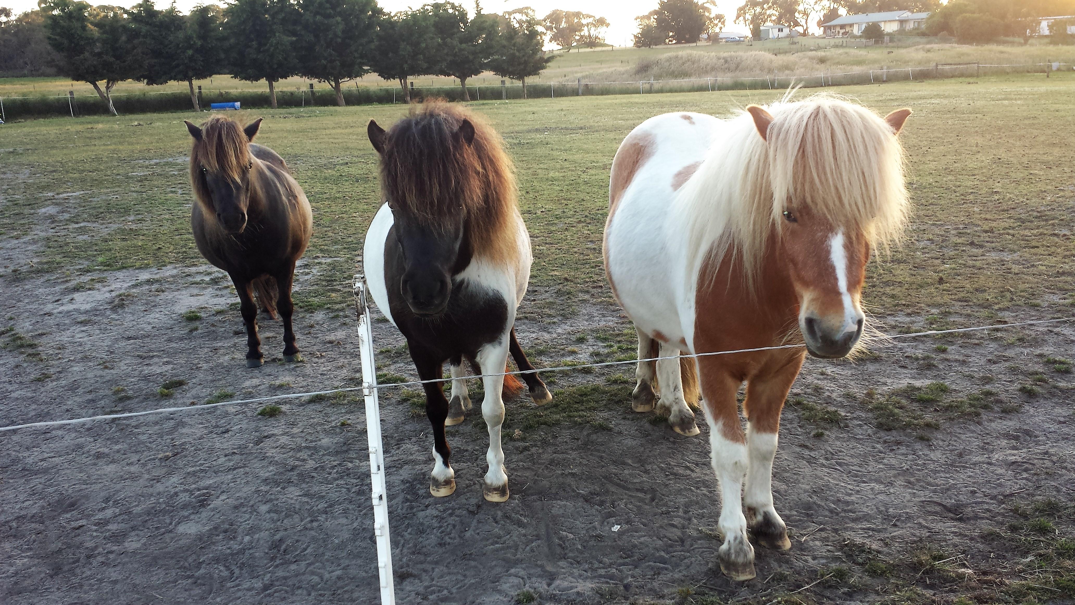ponies17a