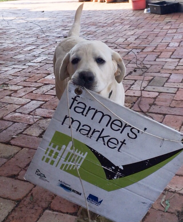 Moose the market dog