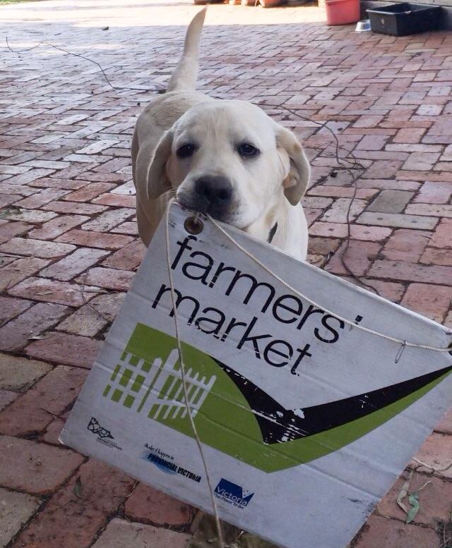 Moose the market dog