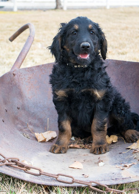12-30-19  Black collar with paws  Male 3
