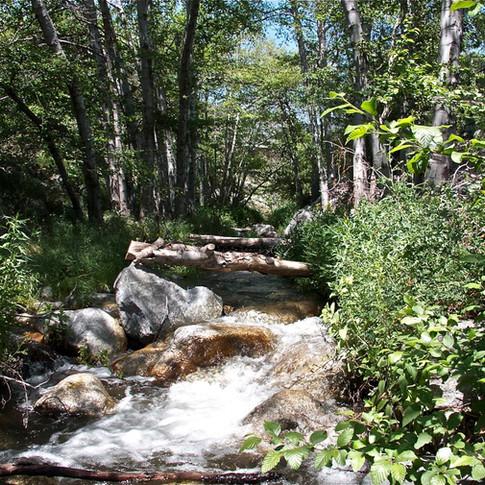 Mtn. Home Creek.jpg