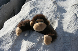 Monkey in the snow, Nendaz