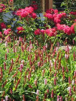 Swiss spring flowers