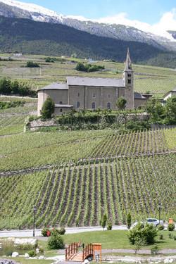 Swiss Wine, vinyards, Valais region