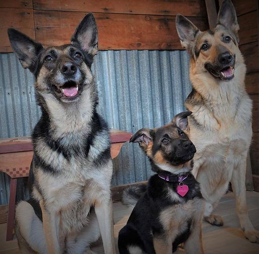 Three shepherds.jpeg