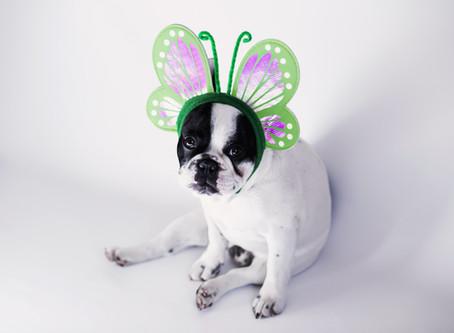 Easter Danger for Pets