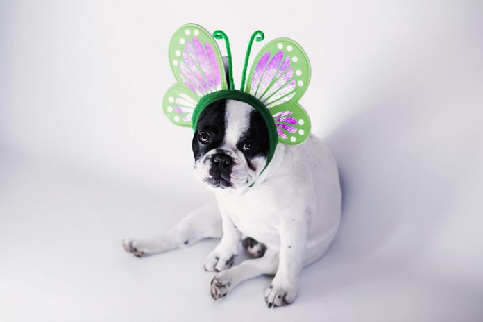 Hond Gekleed als Butterfly