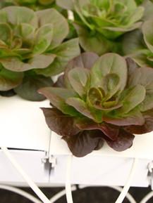 WellSpring Greenhouse-106.jpg