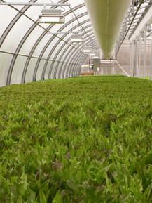 WellSpring Greenhouse-19.jpg