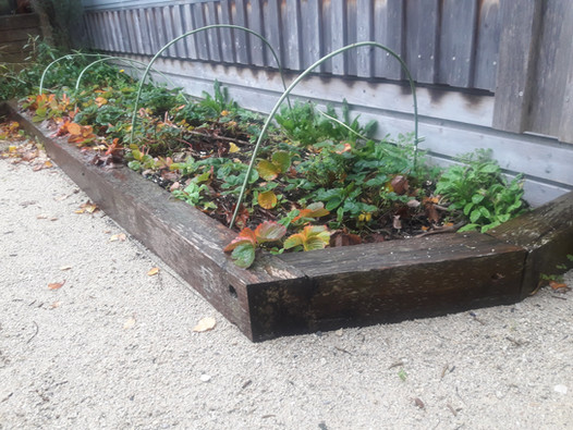 Macrocarpa garden bed and limesand path